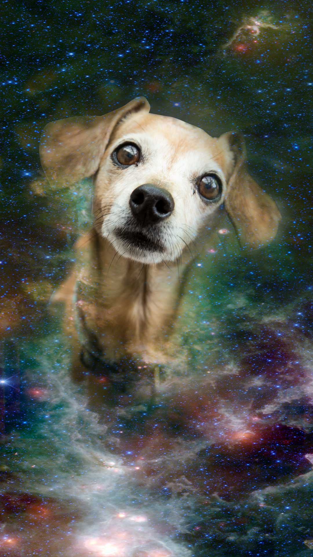 Iphone Wiener Dog Wallpaper Download Casella Creative